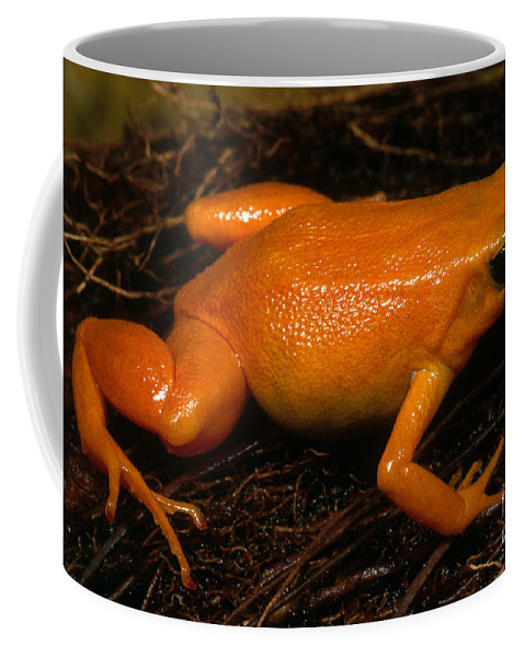 Golden Mantella Coffee Mug featuring the photograph Golden Mantella by Dante Fenolio