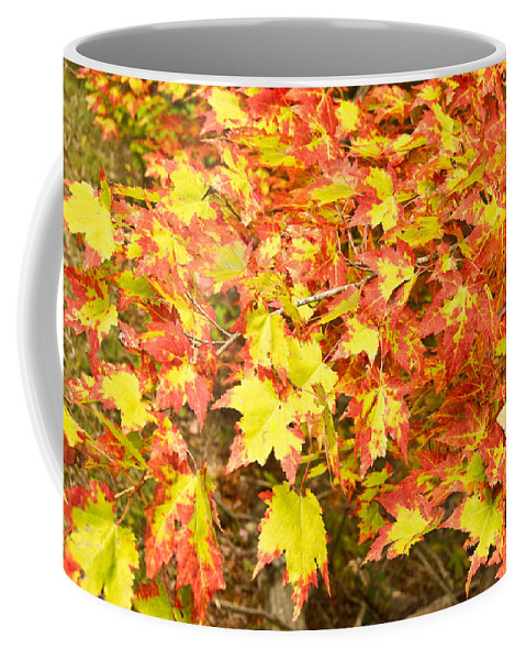 Cumberland Coffee Mug featuring the photograph Golden Maple Leaves by Douglas Barnett