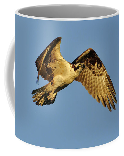 Golden Coffee Mug featuring the photograph Golden Osprey In Dawn's Early Light by Bill Dodsworth