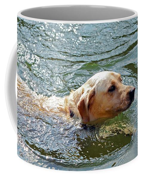 Animal Coffee Mug featuring the photograph Golden Retriever Swimming Close by Susan Leggett
