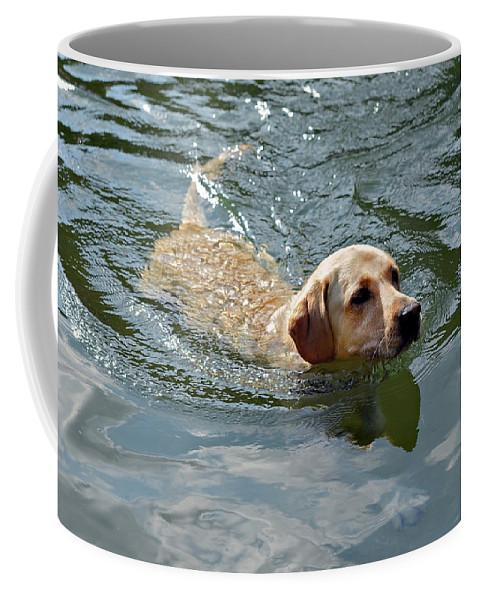 Animal Coffee Mug featuring the photograph Golden Retriever Swimming by Susan Leggett