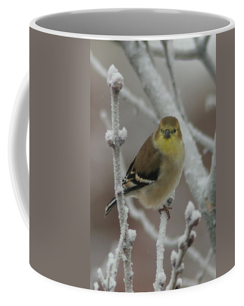 Bird Coffee Mug featuring the photograph Goldfinch by Rick Rauzi