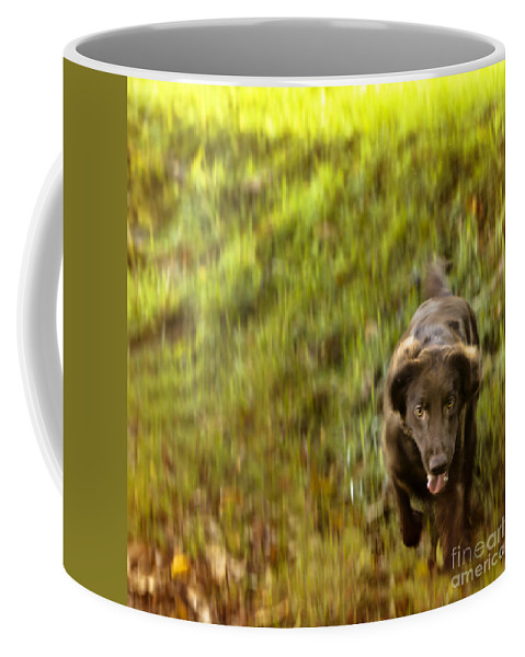 Lilly Coffee Mug featuring the photograph Gonna Get You by Angel Ciesniarska
