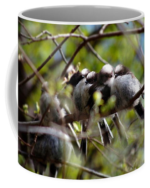 Long-tailed Tits Coffee Mug featuring the photograph Gossip Birds by Gavin Macrae