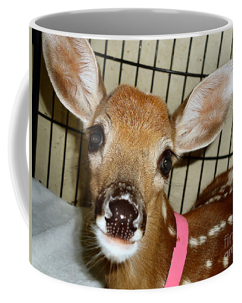 Fawn Coffee Mug featuring the photograph Got Food by Art Dingo