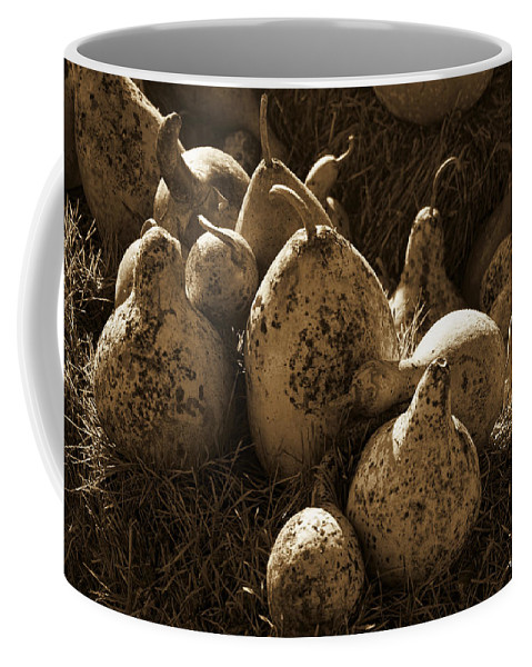 Gourds Coffee Mug featuring the photograph Gourds In Sepia by Kathy Clark