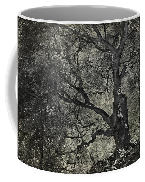 Trees Coffee Mug featuring the photograph Grabbing by Laurie Search