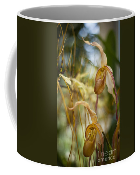 Flower Coffee Mug featuring the photograph Graceful Orchids by Mike Reid