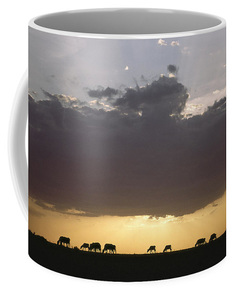 Silhouettes Coffee Mug featuring the photograph Grazing Cattle Silhouetted by James P. Blair