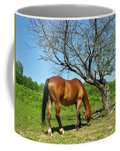 Grazing Horse Coffee Mug featuring the photograph Grazing by Sherman Perry
