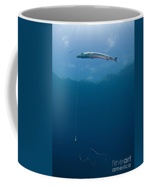 Ecology Coffee Mug featuring the photograph Great Barracuda Hooked With Fishing by Karen Doody
