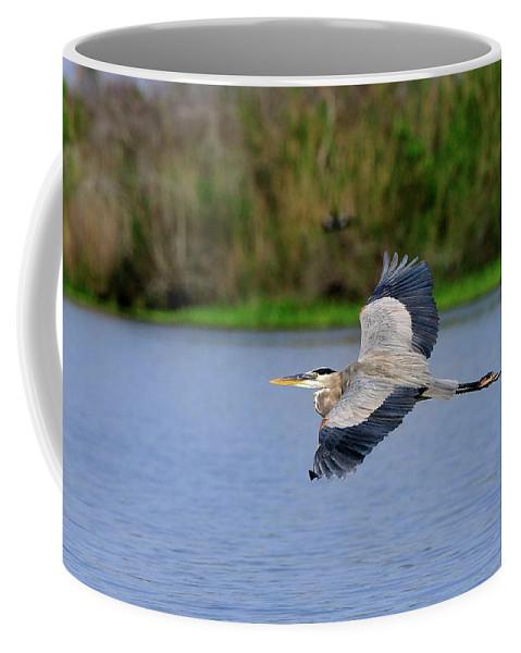Great Coffee Mug featuring the photograph Great Blue Heron Soaring by Bill Dodsworth