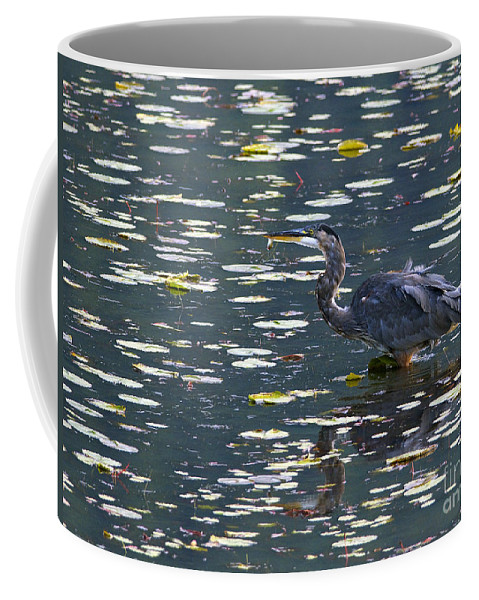 Great Blue Heron Coffee Mug featuring the photograph Great Blue Heron With Snack by Sharon Talson