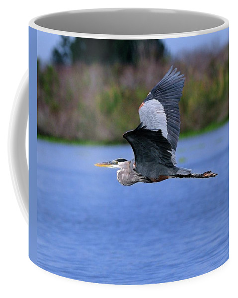 Great Coffee Mug featuring the photograph Great Blue Inflight by Bill Dodsworth