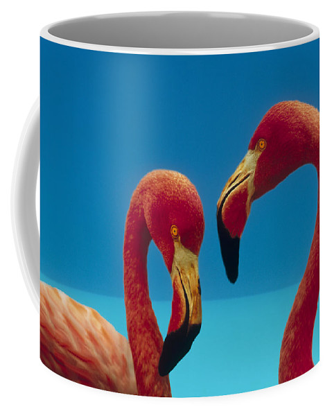 00172310 Coffee Mug featuring the photograph Greater Flamingo Courting Pair by Tim Fitzharris