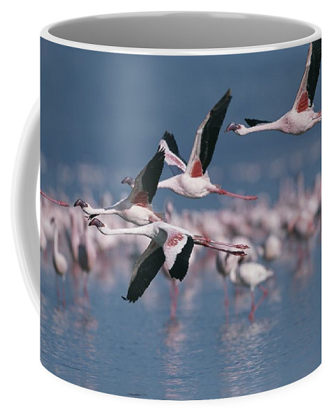 Africa Coffee Mug featuring the photograph Greater Flamingos In Flight Over Lake by Roy Toft