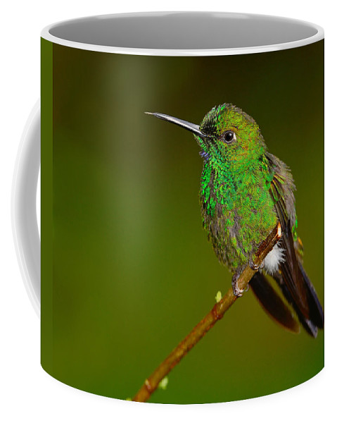 Green-crowned Brilliant Coffee Mug featuring the photograph Green-crowned Brilliant by Tony Beck