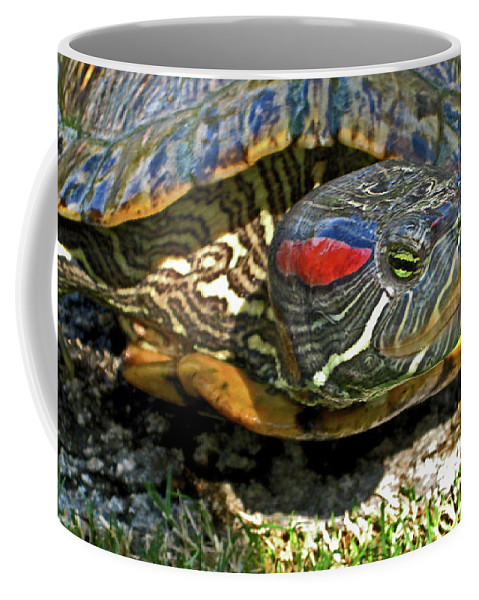 Turtle Coffee Mug featuring the photograph Green Eyed Lady by Lorraine Devon Wilke