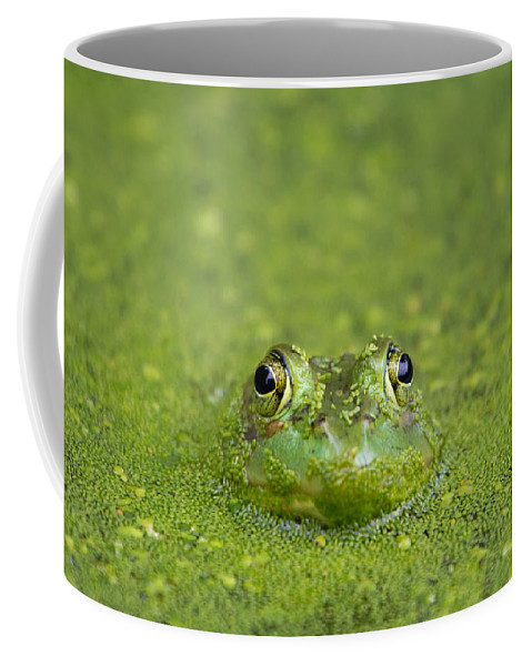 Frog Coffee Mug featuring the photograph Green Frog Eyes by Stephanie McDowell