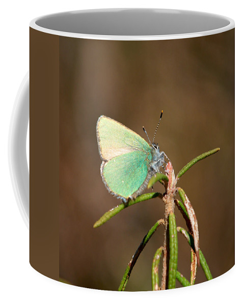 Isosuo Coffee Mug featuring the photograph Green Hairstreak by Jouko Lehto