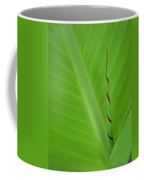 Green Leaf Coffee Mug featuring the photograph Green Leaf With Spiral New Growth by Nikki Marie Smith