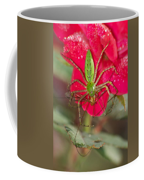 America Coffee Mug featuring the photograph Green Lynx And Pray 8625 3375 by Michael Peychich