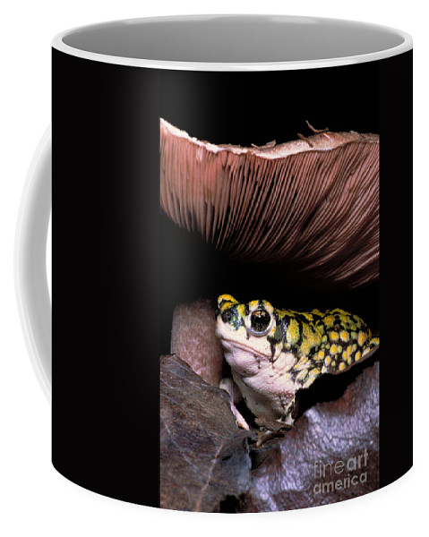 Vertical Coffee Mug featuring the photograph Green Toad by Dante Fenolio