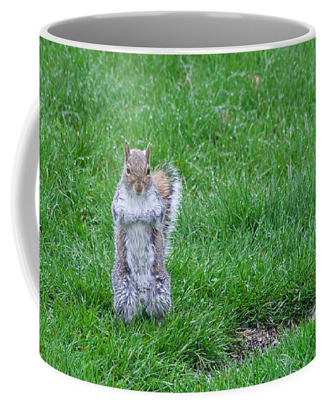 Squirrel Coffee Mug featuring the photograph Grey Squirrel In The Rain II by Jeff Galbraith