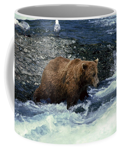 Grizzly Bear Fishing Coffee Mug featuring the photograph Grizzly Bear Fishing by Sally Weigand