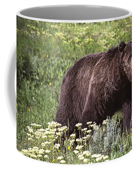 Art Coffee Mug featuring the photograph Grizzly Bear In Yellowstone Neg.28 by Randall Nyhof
