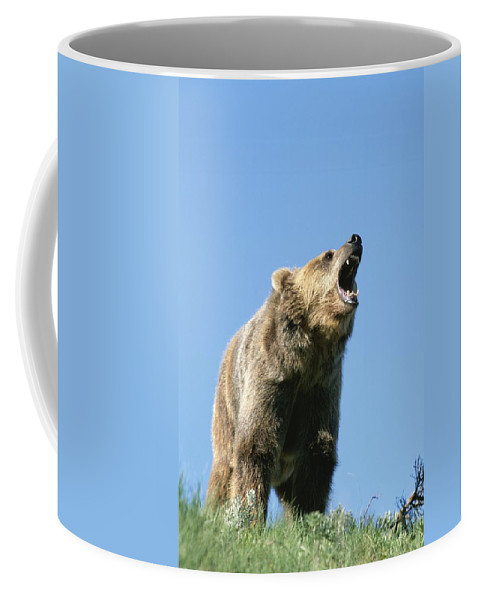 Animals Coffee Mug featuring the photograph Grizzly Bear Vocalizing by Norbert Rosing