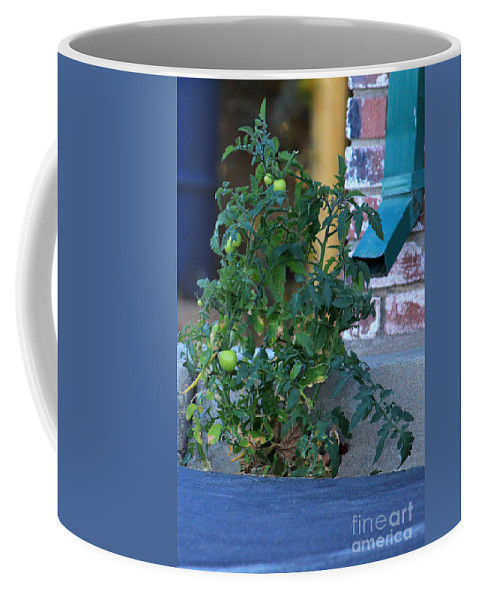 Inspirational Coffee Mug featuring the photograph Grow Where You Are Planted by James Eddy