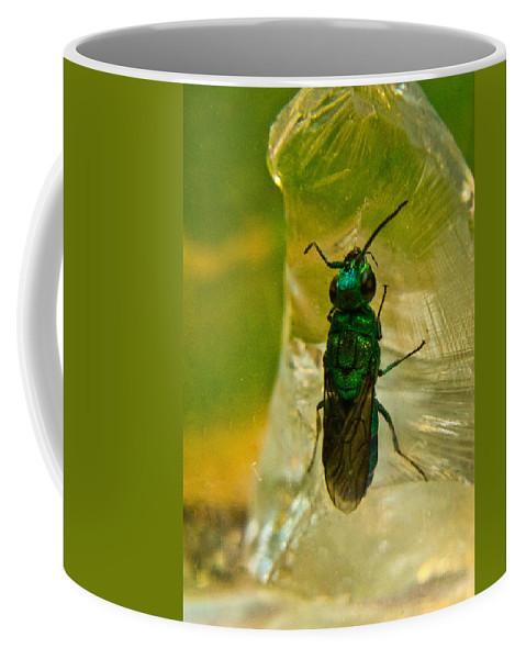 Wasp Coffee Mug featuring the photograph Halicid Bee 15 by Douglas Barnett