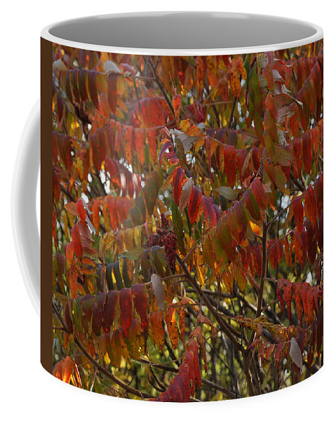 Nature Coffee Mug featuring the photograph Hanging Out Clothes by Susan Capuano