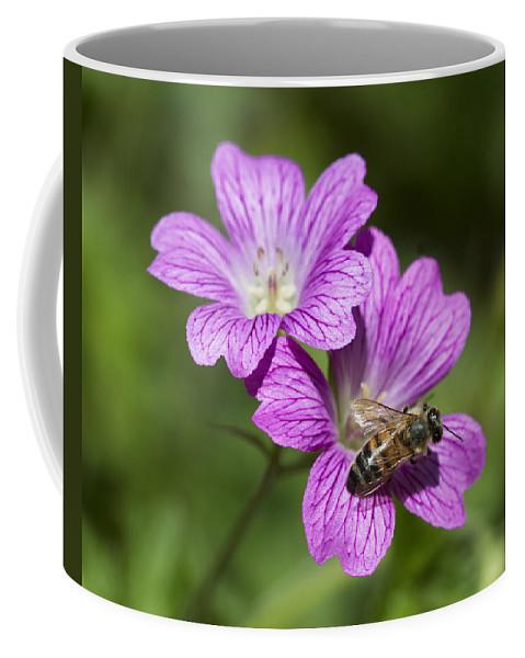 Geraniaceae Coffee Mug featuring the photograph Hardy Geranium And Honey Bee by Kathy Clark