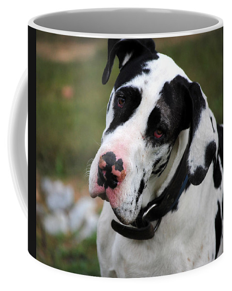Harlequin Great Dane Coffee Mug featuring the photograph Harlequin Great Dane by Jai Johnson