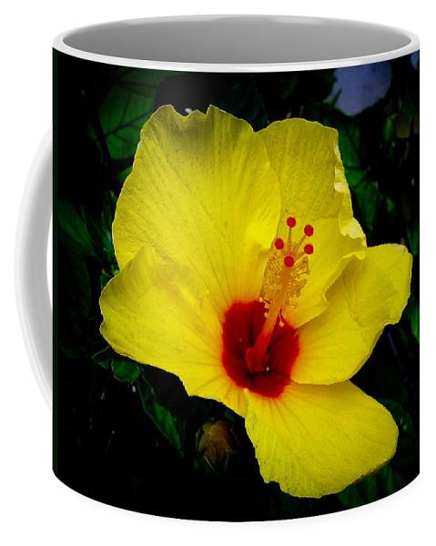 Hibiscus Coffee Mug featuring the photograph Hawaiian Yellow Hibiscus by Athena Mckinzie