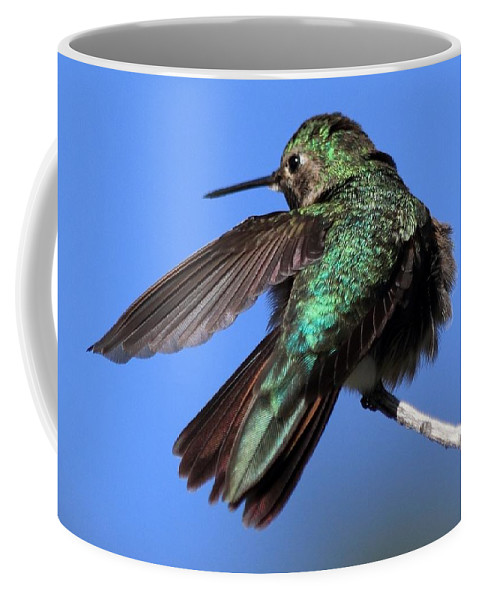 Hummingbird Coffee Mug featuring the photograph He Went That Way by Shane Bechler