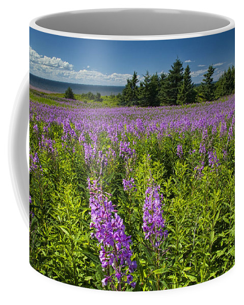 Art Coffee Mug featuring the photograph Hedge Woundwort Flower Blossoms And Field by Randall Nyhof