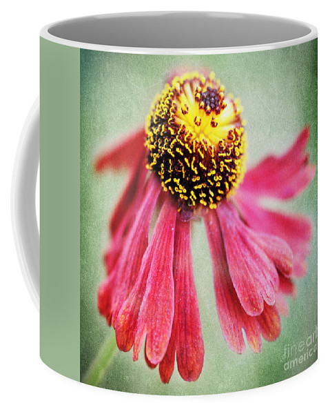 Heleniumm Coffee Mug featuring the photograph Helenium Flower 2 by Neil Overy