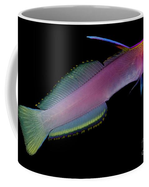 Helfreiky Firefish Coffee Mug featuring the photograph Helfreiky Firefish by Dant� Fenolio