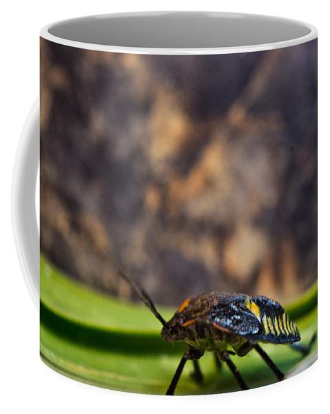 Hemiptera Coffee Mug featuring the photograph Hemiptera Nymph Walikng 1 by Douglas Barnett