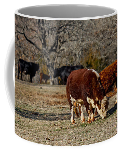 Bovine Coffee Mug featuring the photograph Hereford Cattle by Doug Long
