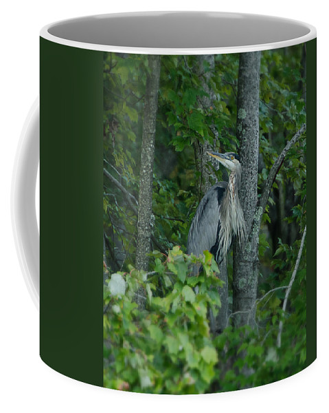 Heron Coffee Mug featuring the photograph Heron On A Limb by Shirley Tinkham