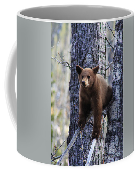 Black Bear Coffee Mug featuring the photograph Holding On by Alyce Taylor