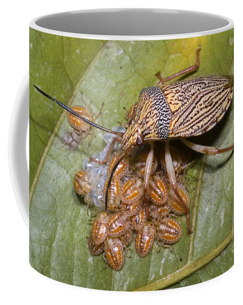 Homoptera Coffee Mug featuring the photograph Homopteran Insect by Dante Fenolio