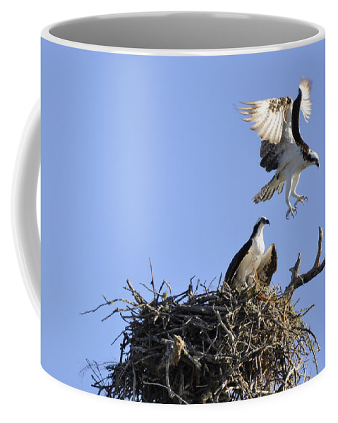 Osprey Coffee Mug featuring the photograph Honey I'm Home by Christine Stonebridge
