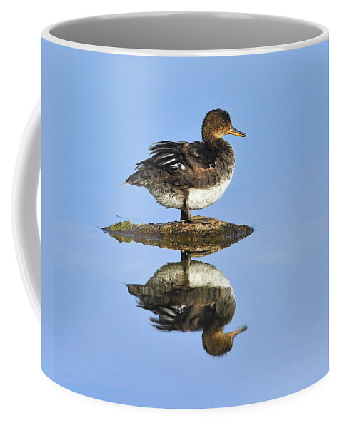 Reflection Coffee Mug featuring the photograph Hooded Merganser Reflection by Tony Beck