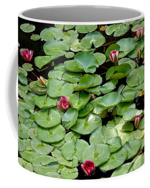 Usa Coffee Mug featuring the photograph Hop To It by LeeAnn McLaneGoetz McLaneGoetzStudioLLCcom