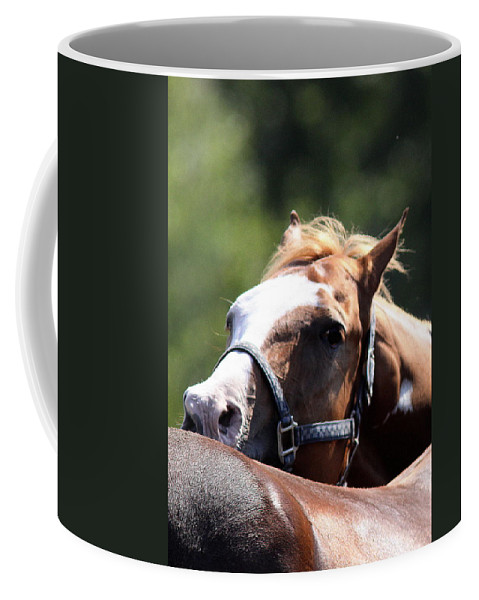 Mule Day Coffee Mug featuring the photograph Horse At Mule Days 2012 - Benson by Travis Truelove